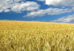 两岸人士:乡村振兴战略为两岸农业合作带来广阔前景