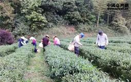 深耕大陆接力创业15载:两代台商的梅州茶缘