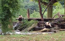 成都大熊猫基地