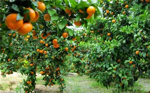 惠台政策实在好 广西桂林台胞喜参新农保