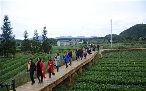 台湾妇女菁英贵州行考察湄潭县、凤冈县茶产业