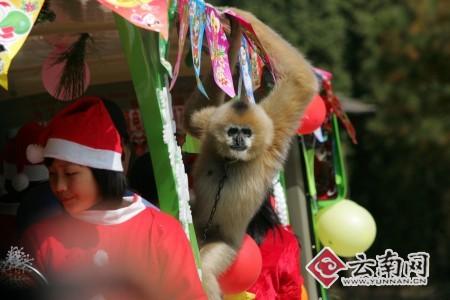 野生动物园动物也过圣诞节