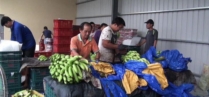 """台媒:""""一根香蕉""""道尽了台当局的""""失能荒谬"""""""