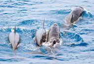 大陆游客赴台赏鲸人数大减3成 台业者叫苦