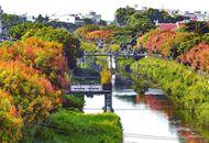 屏东万年溪畔栾树变色 欧洲风情画就在眼前.jpg