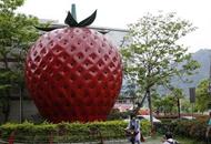 """台湾写真:""""草莓之乡""""未曾褪去的甜蜜"""