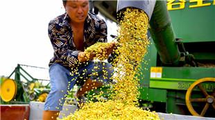 中国金秋美食地图 你的家乡正在收啥?