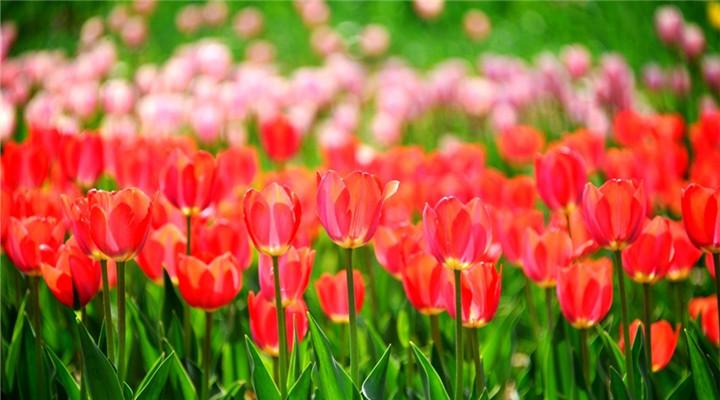 春天来了很快又要走了,不可辜负的那些花儿
