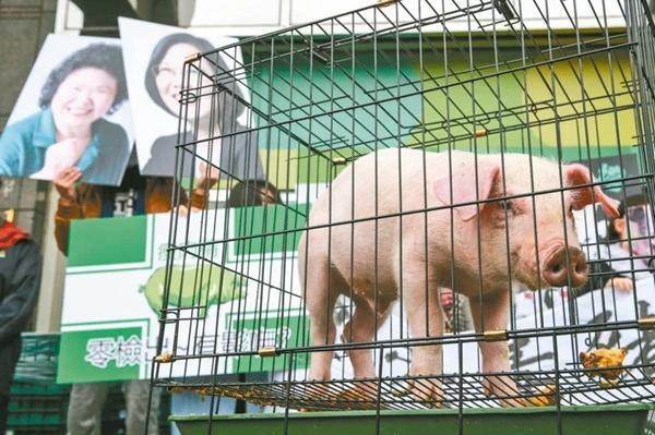 """民进党为何要开放""""莱猪""""进口?蔡英文说出了""""真相"""""""
