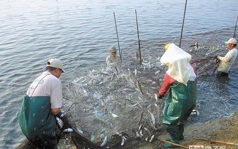 赖清德没有卖出半尾虱目鱼 台南渔民吁民进党别再骗