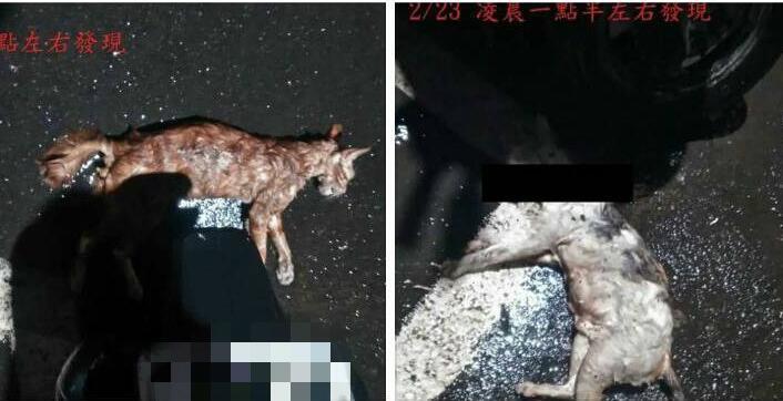 台湾基隆现变态杀猫怪客,野猫遭利器划破喉咙