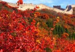 看打铁花 焰火飞龙 国庆节就到北京延庆-长城铁花