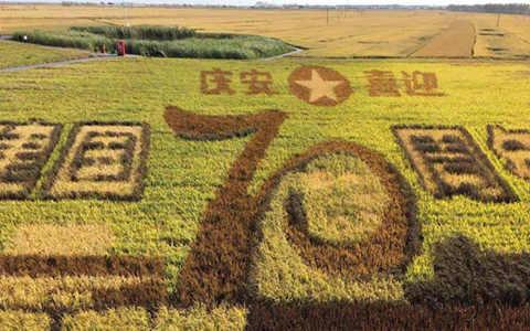 """【新时代东北振兴】绥化:""""寒黑土地""""上农业现代化建设的领跑者"""