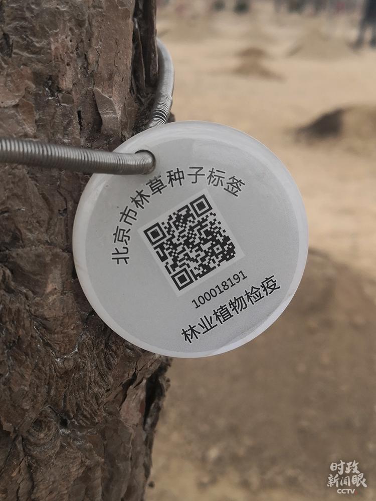 """时政新闻眼丨 参加首都义务植树,习近平揭示"""""""
