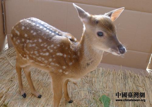 > 正文    台北市立动物园工作人员还特制了一张印有鹿宝宝照片的满月