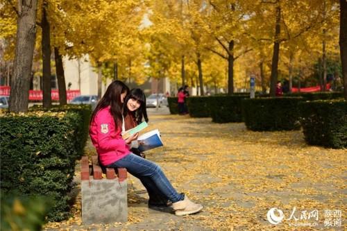 学生在银杏树下晨读