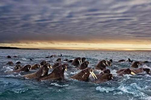摄影师拍各类动物大迁徙奇观