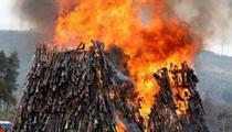 肯尼亚公开焚毁数千把非法枪支 现场火焰熊熊