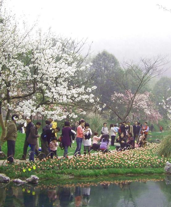 在杭州太子湾公园里,听着潺潺的溪水声,游人与郁金香、樱花甜蜜合影。   中新浙江网3月20日电 (记者柴燕菲 实习生赵晔娇)暮春三月,江南草长,杂花生树,群莺乱飞。赏桃花、放风筝、拍婚纱照,无论是杭州人还是外地观光客,他们都在西子湖畔找到了自己的春天。   忙趁东风放纸鸢   儿童放学归来早,忙趁东风放纸鸢。伴着徐徐的暖风,一只堪称史上最迷你的风筝飞舞在了西湖上方。   这只蝴蝶才0.